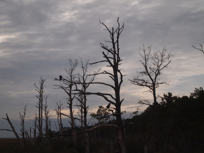 trees bordering Swan Cove Pool