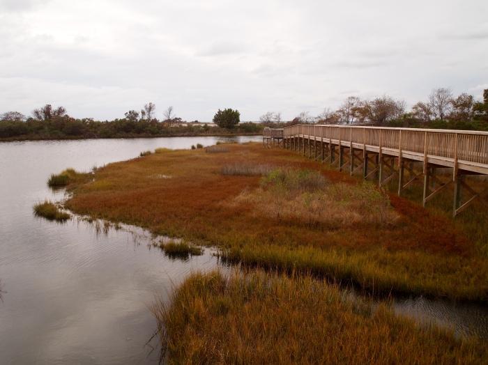Marsh walk on Assateague Island