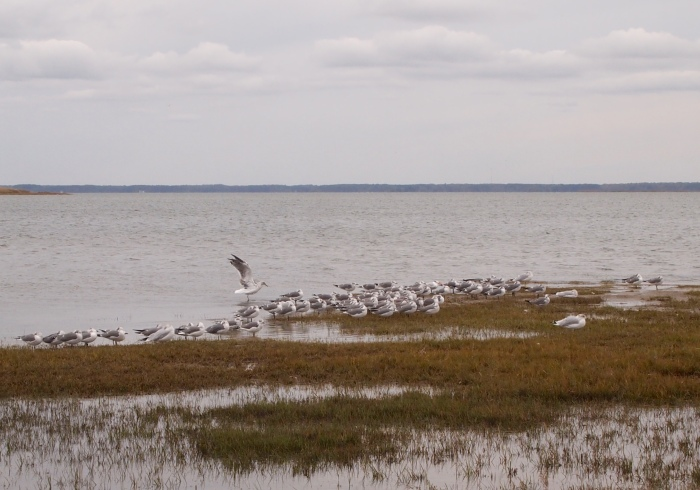 birds on Assateague Island