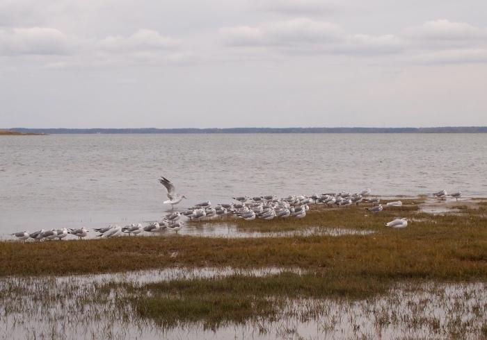 birds on Assateague Island
