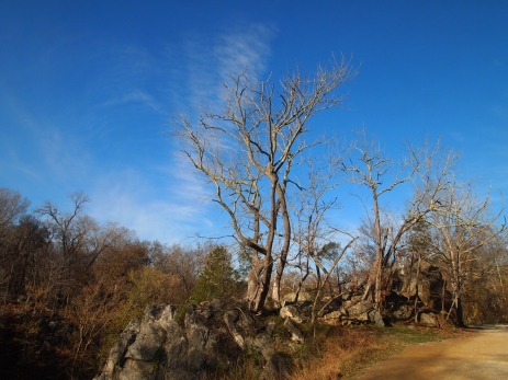 rocky outcrop and bare tree along the towpath