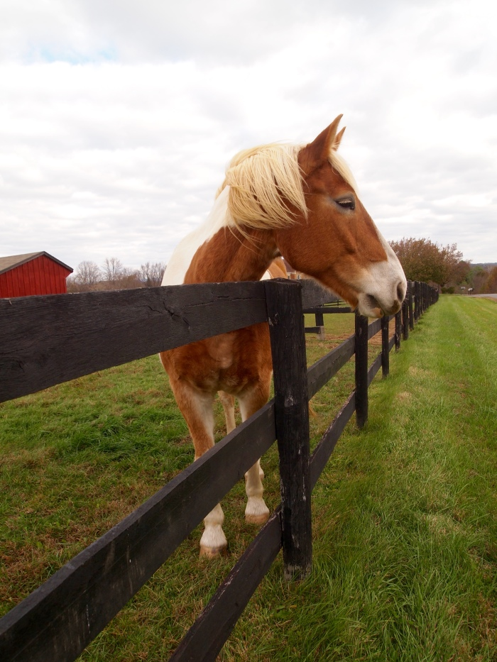 friendly horse in Loudoun County