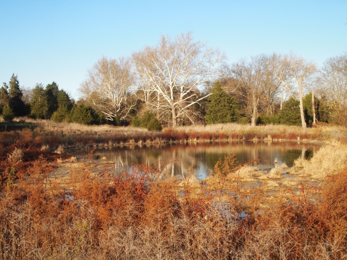 the pond along the Mumma/Roulette Education Trail