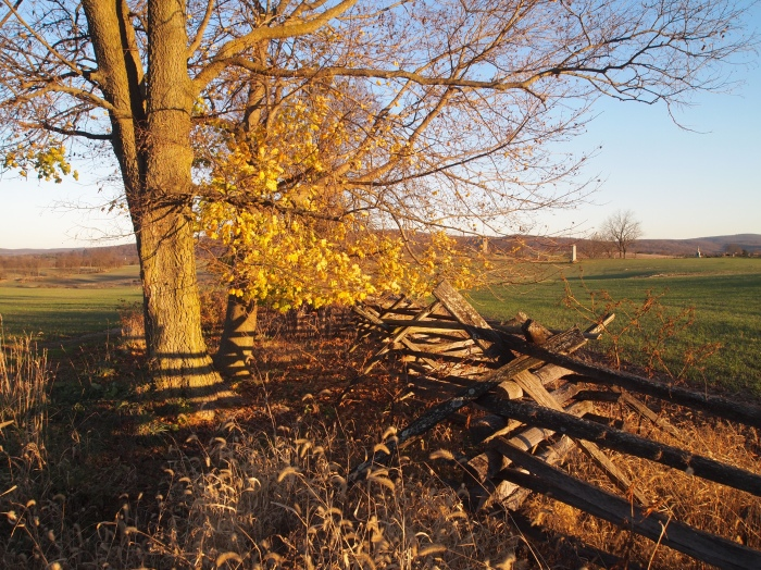 fences and autumn trees