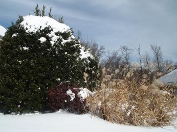 winter bushes