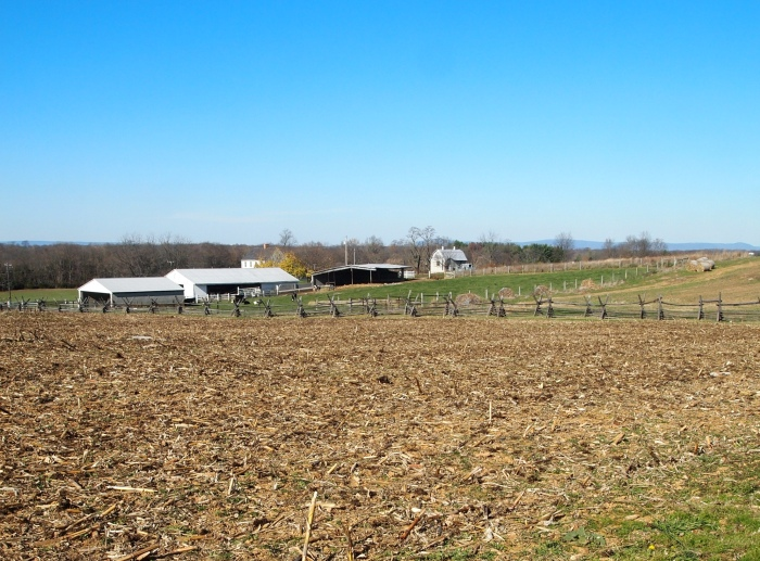 looking across the Cornfield to the Miller farm