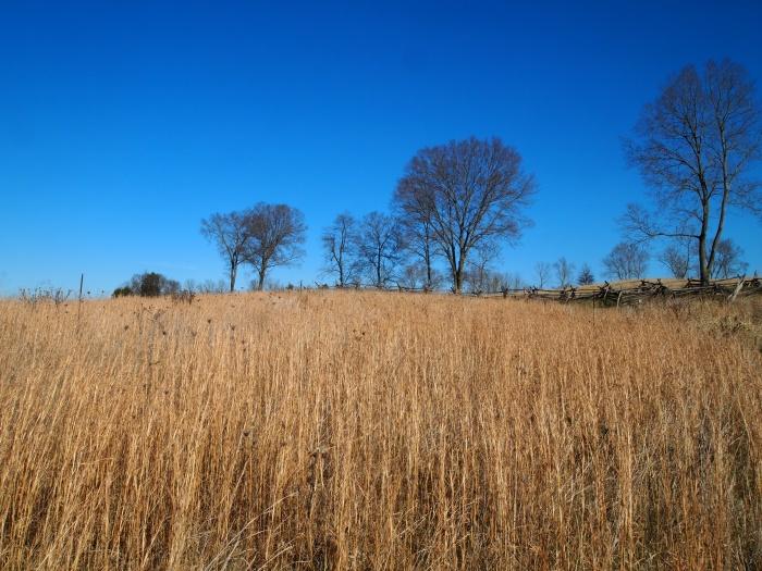 Cornfield on the Final Attack Trail