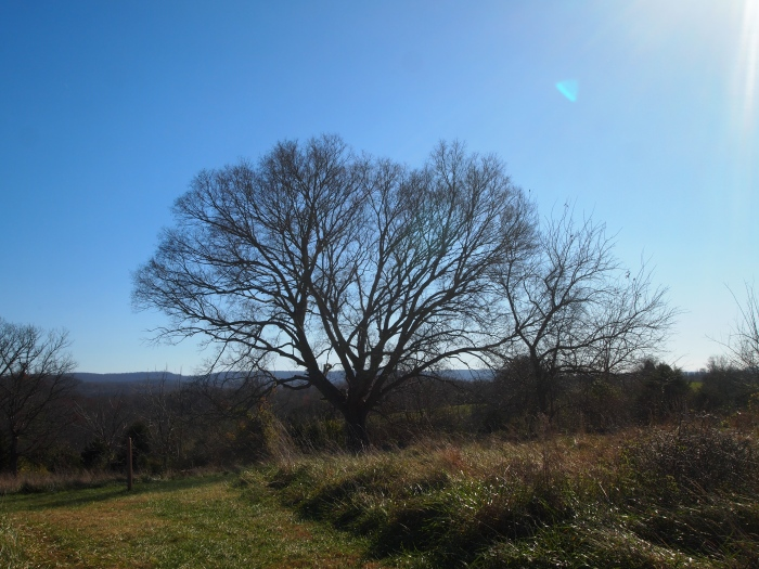 the hackberry tree at the extreme southern end of the battlefield