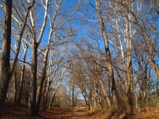 path along the Chesapeake and Ohio Canal (C&O Canal)