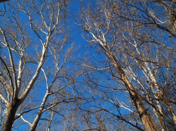 winter trees at the C&O Canal