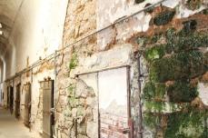mossy interior