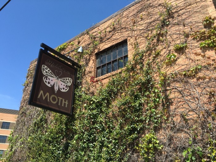 The Meddlesome Moth