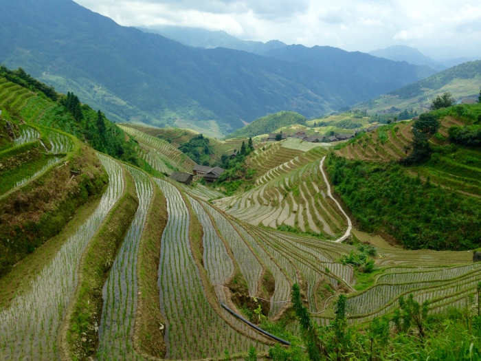 The Longji Rice Terraces in Guangxi, China