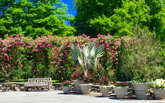 Rose Arbor(iPhone)