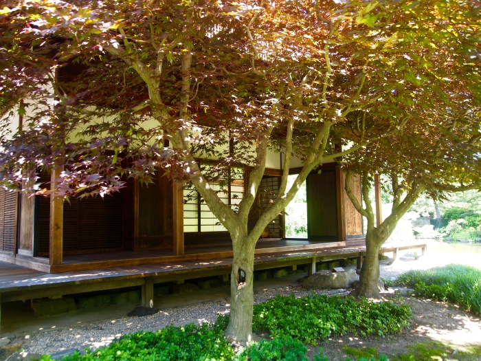 maple trees and the tea house