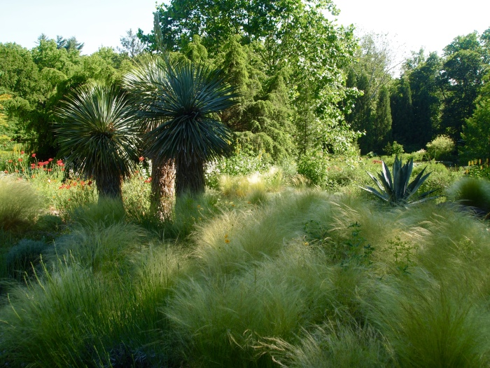 grasses in the pond garden