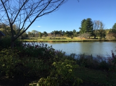 pond at Meadowlark