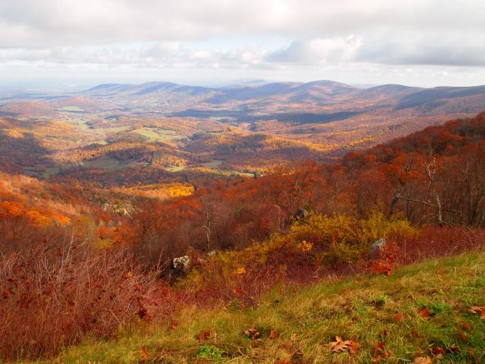 rich orange hills