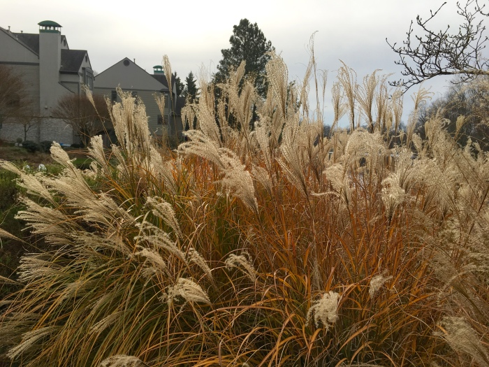grasses around Lake Newport