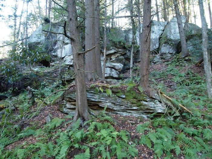 Elakala Trail