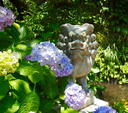 creature among hydrangeas at Zeniarai Benzaiten