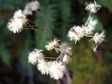 mini-white flowers