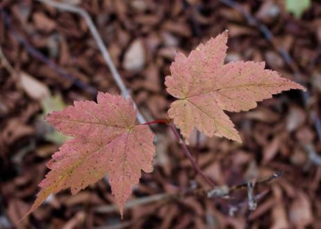 a little autumn color