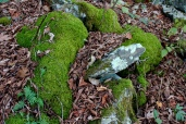 rocks, moss and leaves