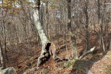 strange-shaped trees