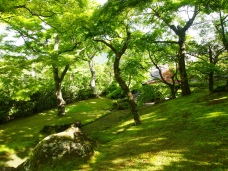 moss garden at the Hakone Museum of Art