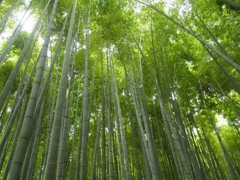Hokokuji (Bamboo Temple)
