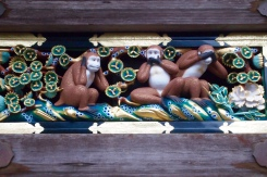 the monkeys of Nikko