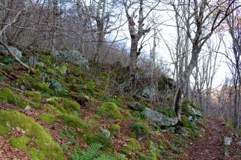 Hawksbill Gap hike