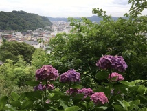 view from the Hydrangea Walk at Hasedera