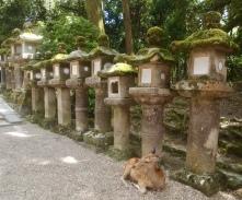 lanterns in Nara
