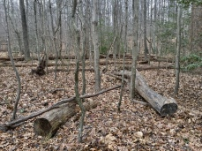 the drab woods