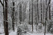 the snowy woods